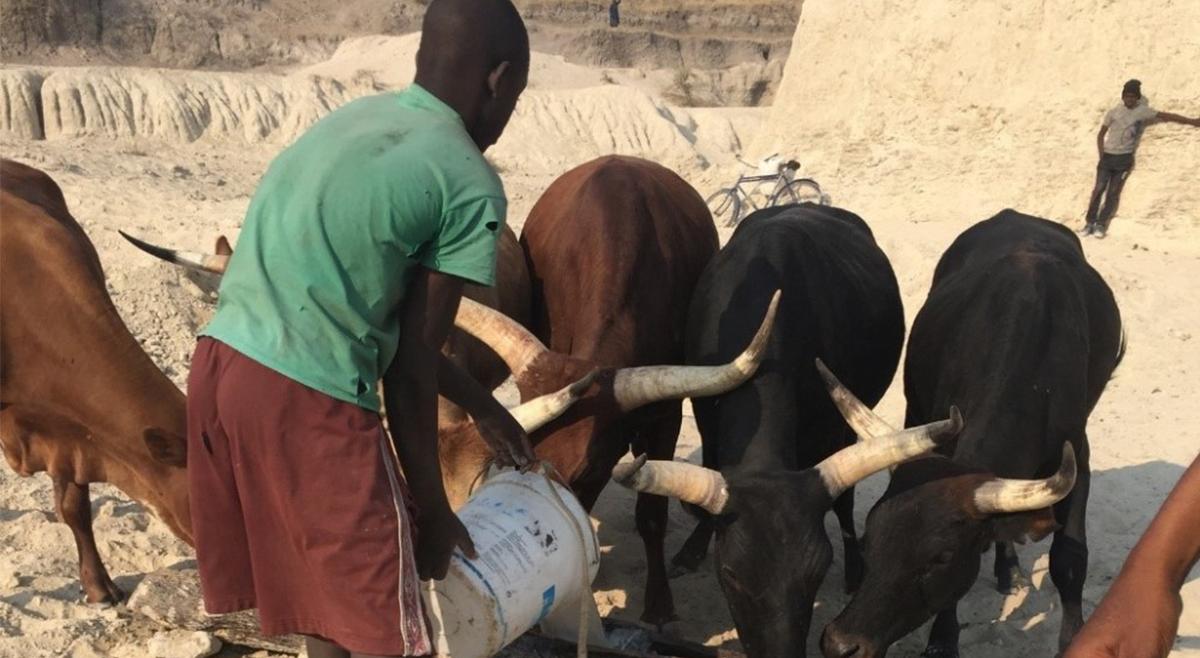 PNUD: Lança projecto para acudir os males provocados pela seca no Sul de Angola