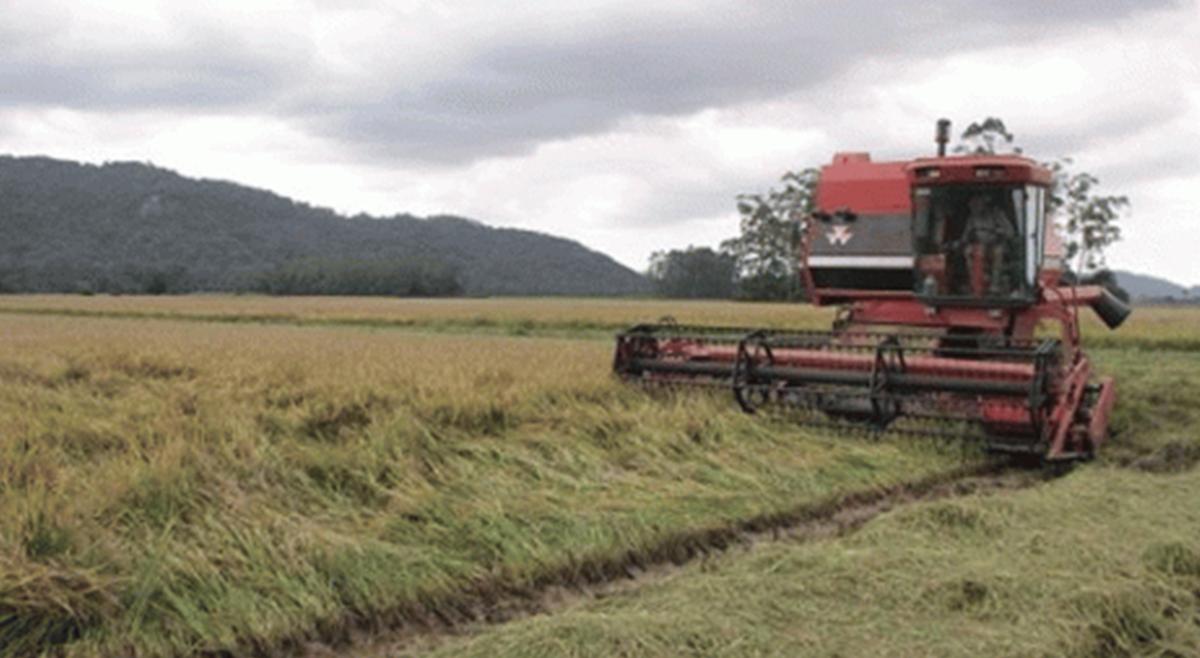 Projecto europeu emprega fundos na produção agrícola