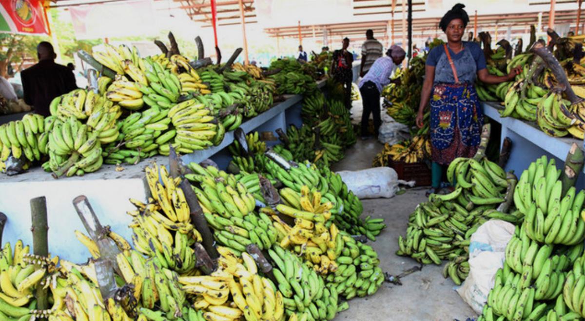 União Europeia aplica 65 milhões de euros em programa de segurança alimentar