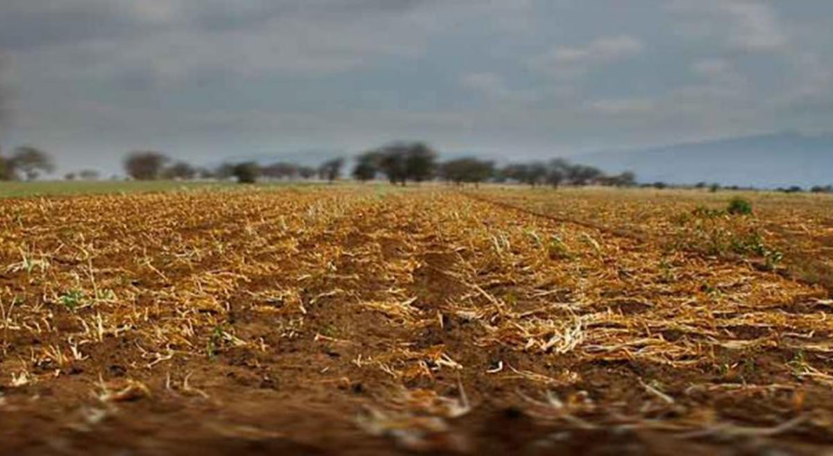 União Europeia apresenta programa de segurança alimentar