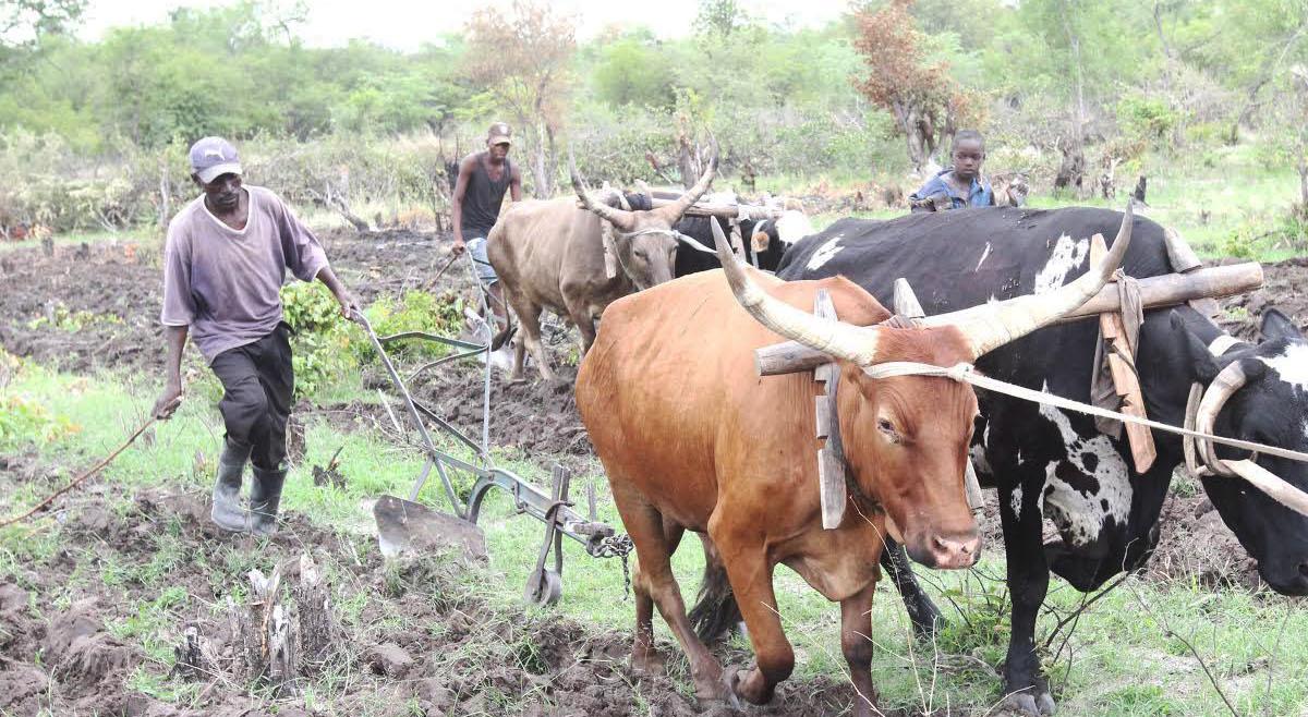 Camponeses aprendem novas técnicas agrárias